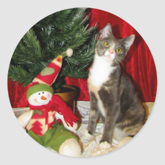 Sticker Rond Chat, chaton, Noël, délivrance, photo