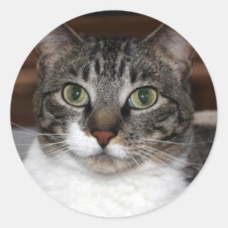 Sticker Rond Chat tigré vous regardant photo