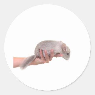 Sticker Rond chinchilla