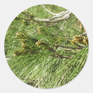 Sticker Rond Cônes non mûrs de mâle ou de pollen de pin