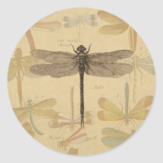 Sticker Rond Dessin vintage de libellule