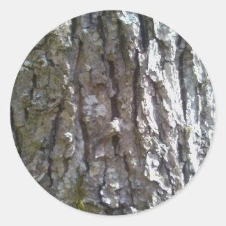 Sticker Rond Écorce d'arbre d'hickory de Pignut