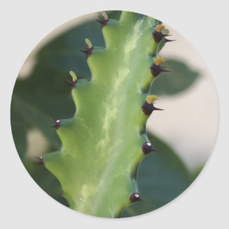 Sticker Rond Feuille de cactus