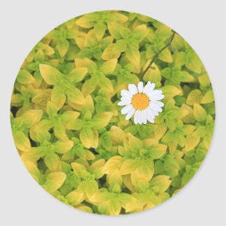 Sticker Rond Fleur de marguerite atteignant pour The Sun