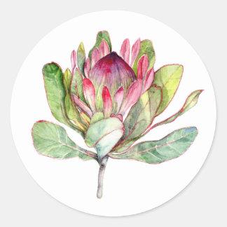 Sticker Rond Fleur de Protea