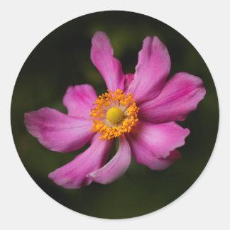 """Sticker Rond Fleur japonaise d'anémone de """"Prinz Heinrich"""" de"""