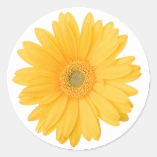 Sticker Rond Fleur jaune lumineuse de marguerite de Gerbera