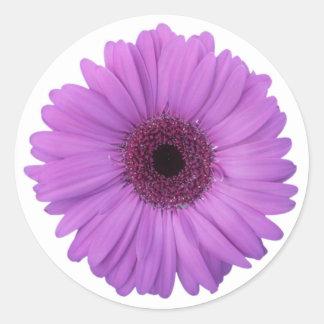 Sticker Rond Fleur photographique assez pourpre de marguerite