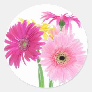 Sticker Rond Fleurs de marguerite de Gerbera