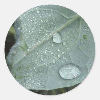 Sticker Rond Gouttes de pluie sur le feuille de chou-fleur