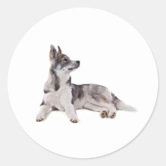 Sticker Rond husky puppy