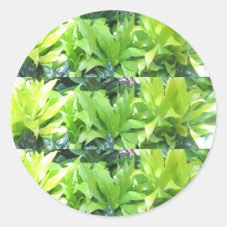 Sticker Rond Jardin d'agrément vert : Fleur élégante de ressort