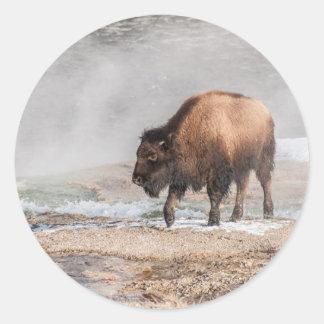 Sticker Rond Jeune bison ou Buffalo beau