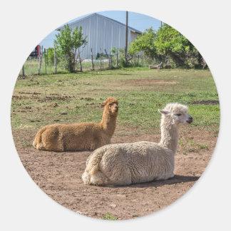 Sticker Rond Lamas beaux(glama de lama) sur l'herbe verte