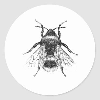 Sticker Rond Le cru, antiquité gaffent l'illustration d'abeille