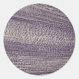 Sticker Rond Les cellules d'une fève s'enracinent (faba de