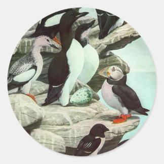 Sticker Rond Macareux vintages, oiseau aquatique, animaux