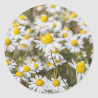 Sticker Rond Marguerites