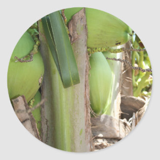 Sticker Rond Noix de coco vertes aussi