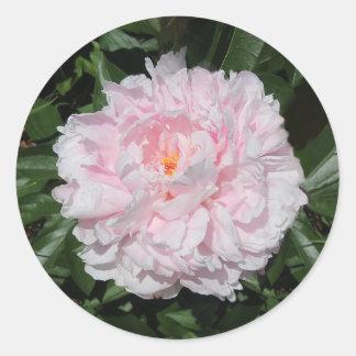 Sticker Rond Pivoine de rose en pastel