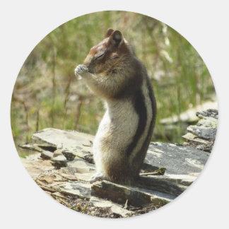 Sticker Rond Tamia en photo de nature du parc national II de