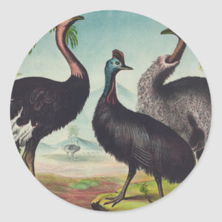 Sticker Rond Trio des autruches