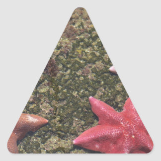 Sticker Triangulaire Étoiles de mer vivantes (4).JPG