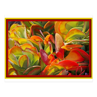 Succulents 091514.jpg carte postale
