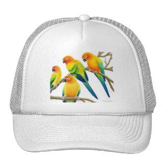 Sun Conure Parrots le casquette
