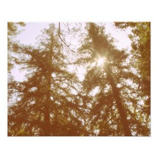 Sun par des arbres impression photo