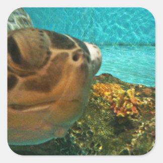 Surprise de tortue de mer sticker carré