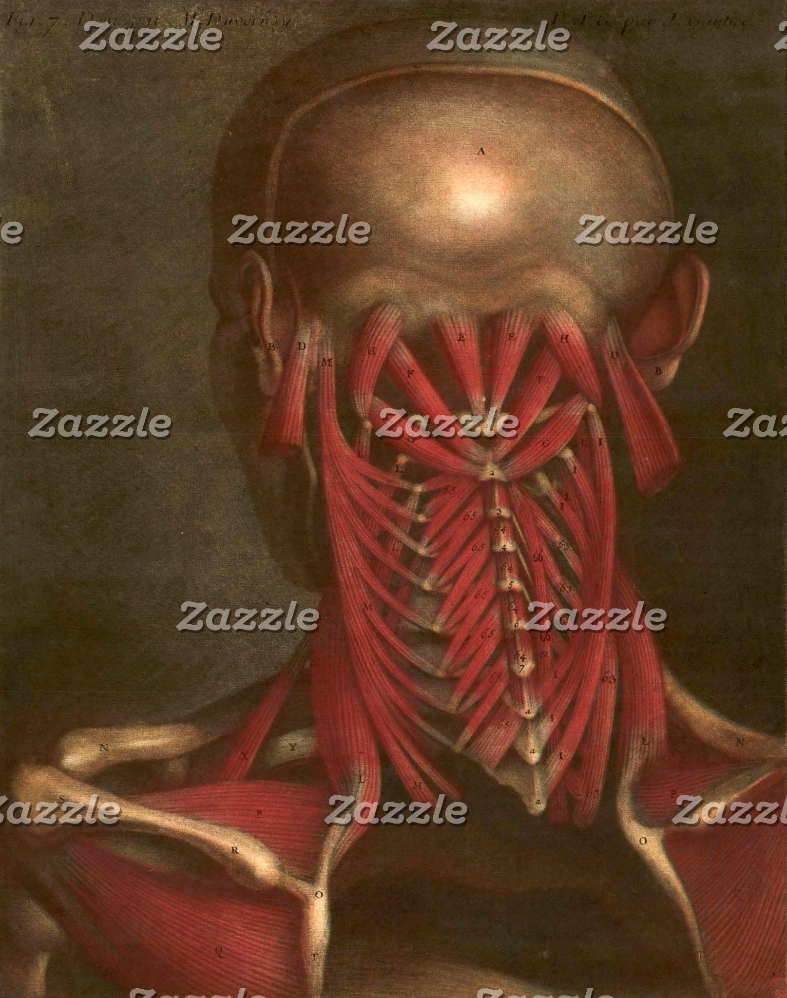 Vintage Anatomy | Neck and Shoulders II