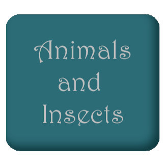 Animals and Insects