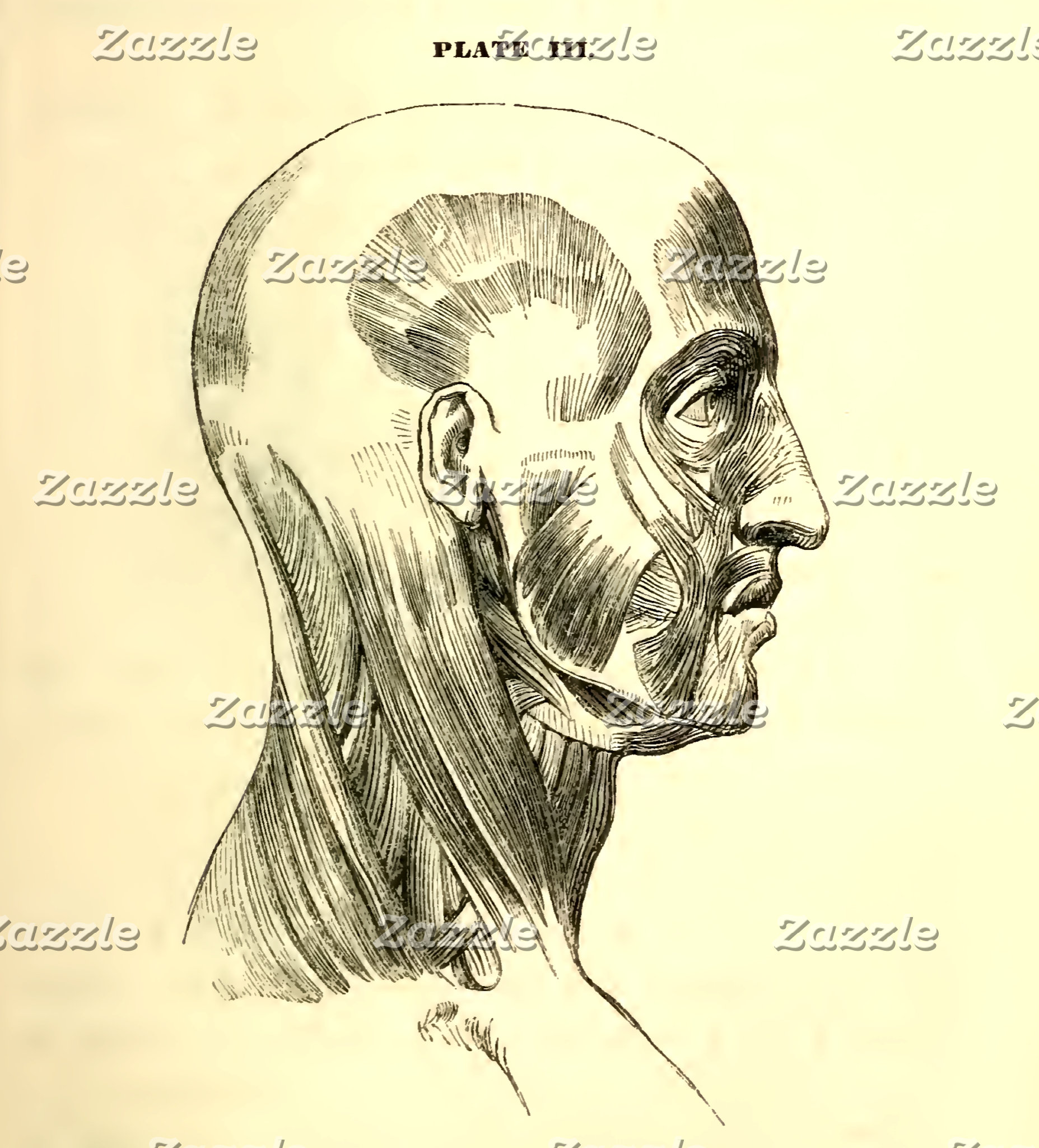 Vintage Anatomy | Muscles of the Head