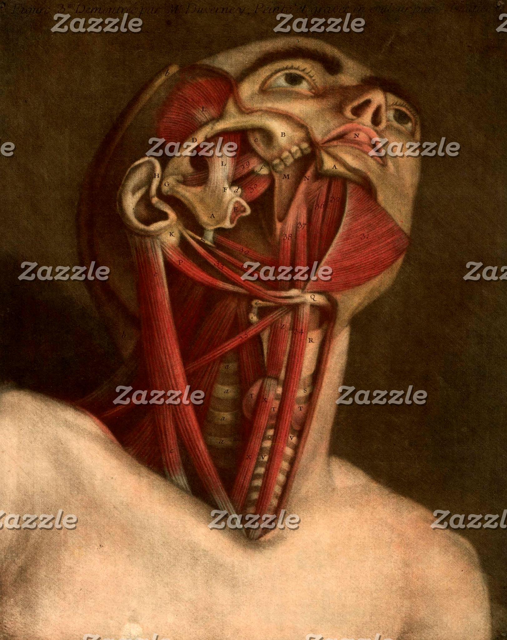 Vintage Anatomy | Head III
