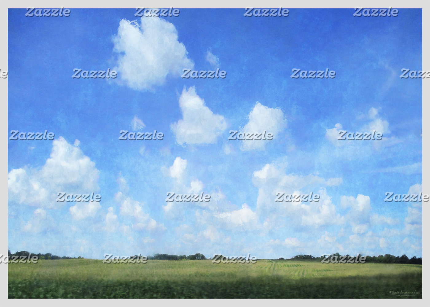 Cornfield and Blue Sky