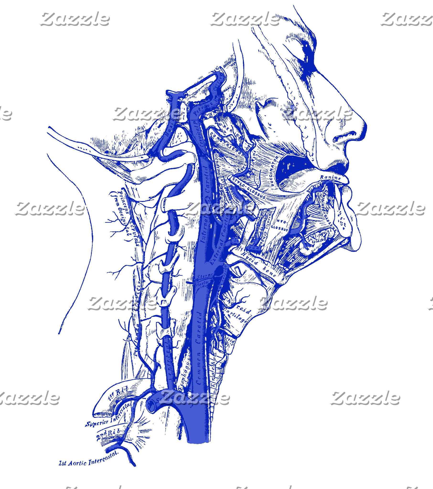 Vintage | Internal carotid & vertebral arteries