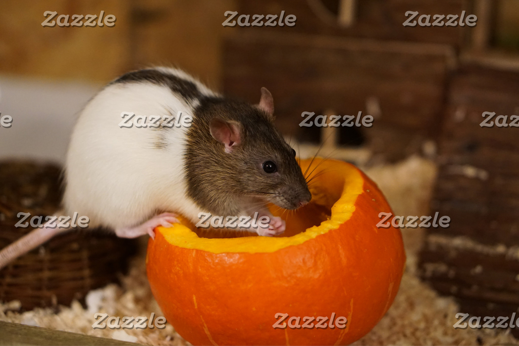 Rat on pumpkin