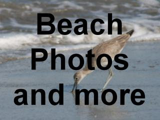 Beach Photographs, beach pictures, beach designs