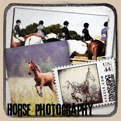 Drake Photography Equestrian Prints & Gifts