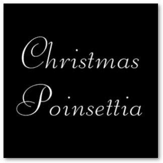 Christmas Poinsettia