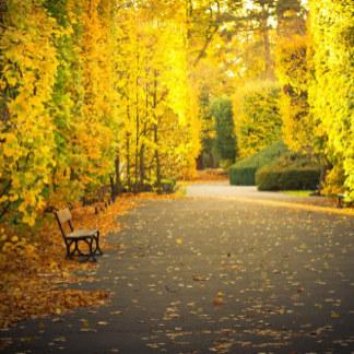 Herfst natuur