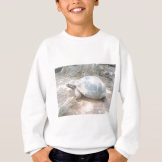 SWEATSHIRT TORTUE