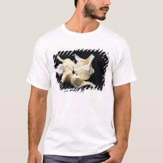 T-shirt Ail