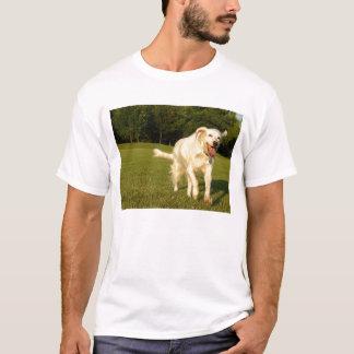 T-shirt Ange de sourire