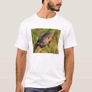 T-shirt Anhinga et poissons