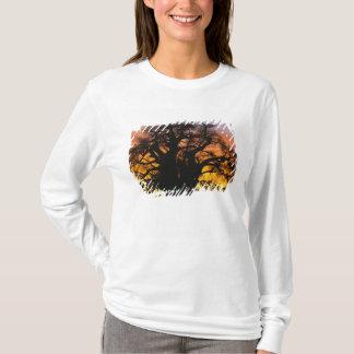T-shirt Arbre africain de baobab, digitata d'Adansonia,
