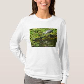 T-shirt Ardea gris de héron cinerea