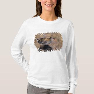 T-shirt Arrosez le rail, aquaticus de Rallus, adulte