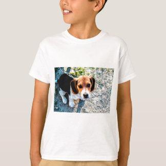 T-shirt Beagle mignon